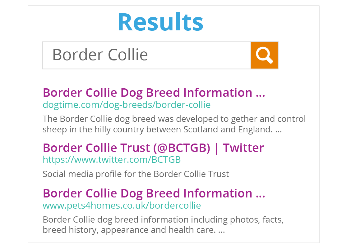 A screen of search results that have come up as a list of website links and a short introduction passages for Border Collies