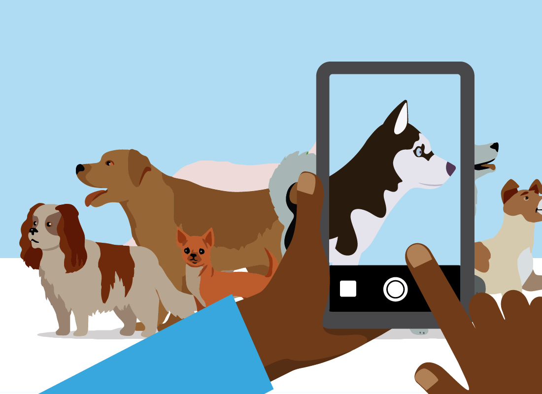 Taking a photo of a group of dogs