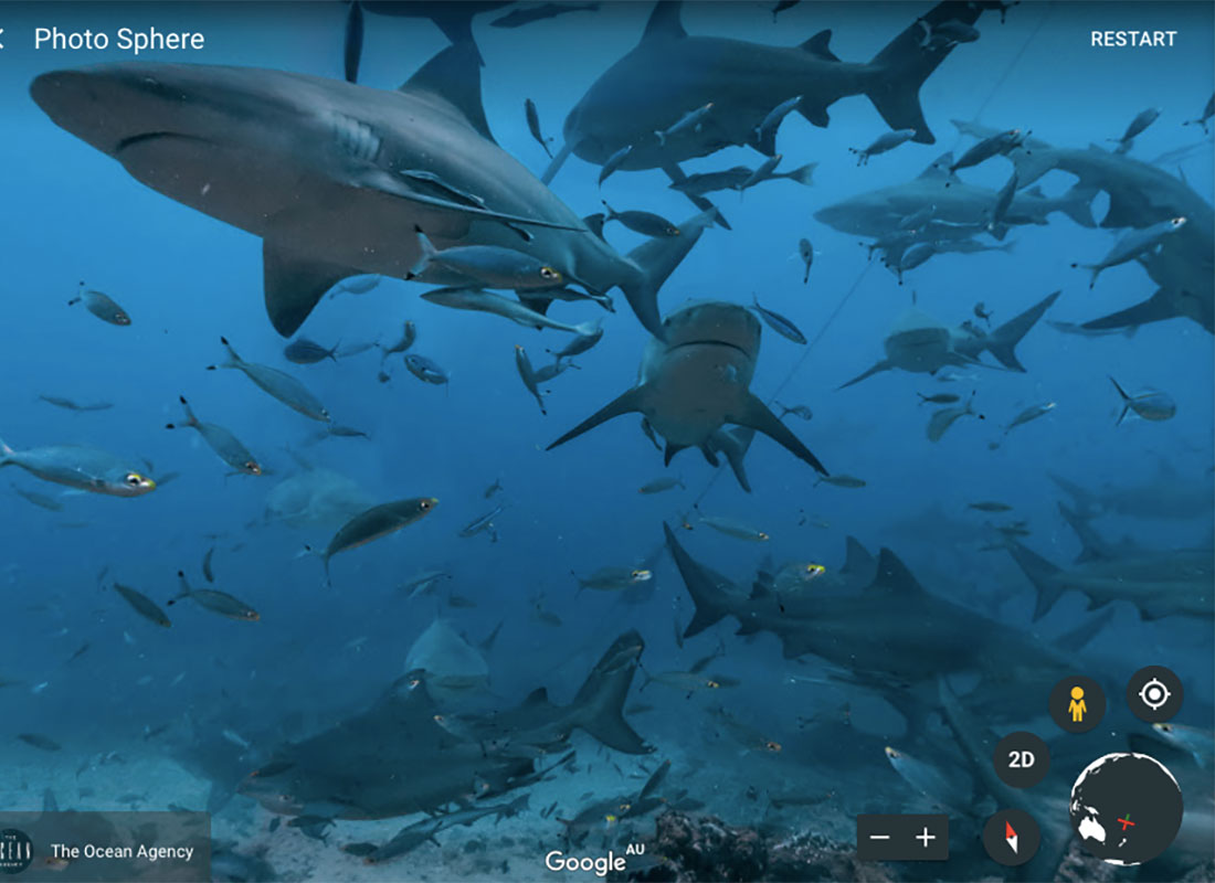A school of sharks and some very brave fish
